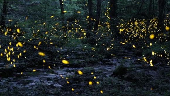 sunmo0713fireflies252371640x360.jpg